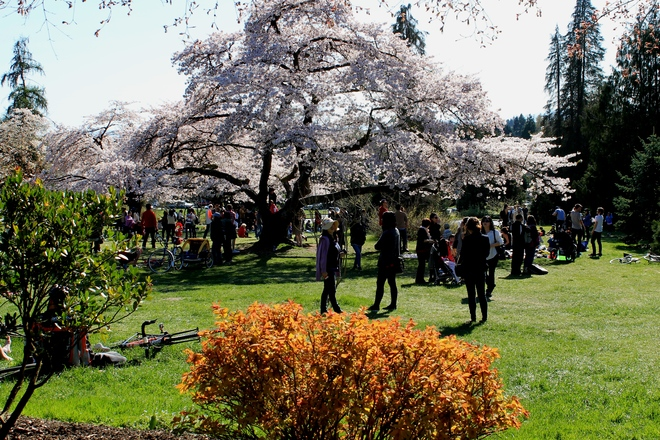 Spring Vancouver, British Columbia Canada