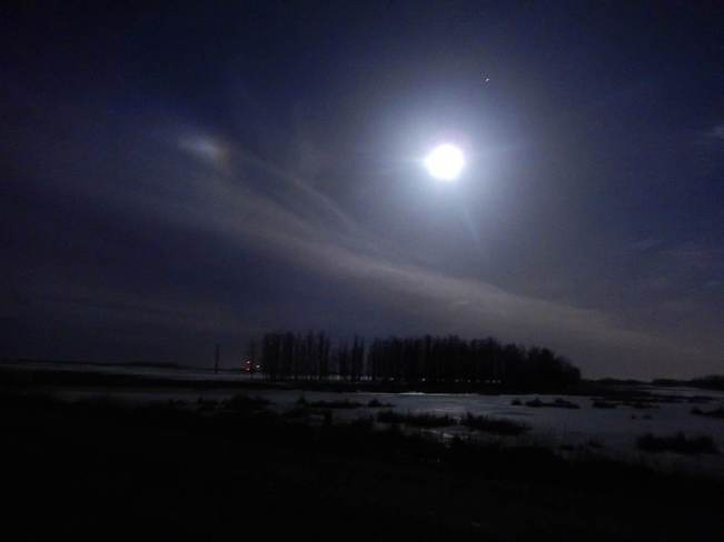 mooncat Olds, Alberta Canada