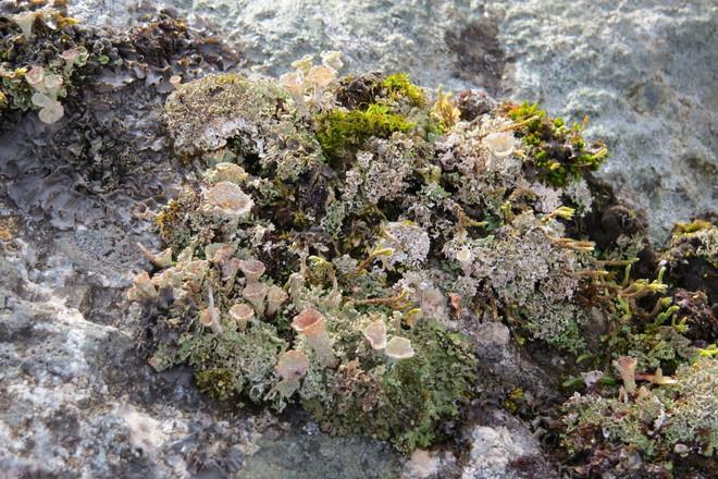 A Plethora of Lovely Lichens Chester, Nova Scotia Canada