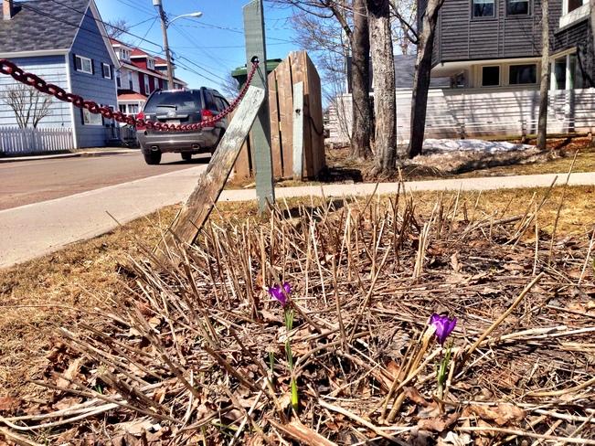 spring Charlottetown, Prince Edward Island Canada