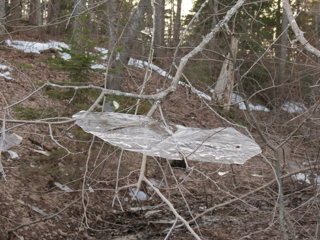 Shards of Ice Moncton, New Brunswick Canada