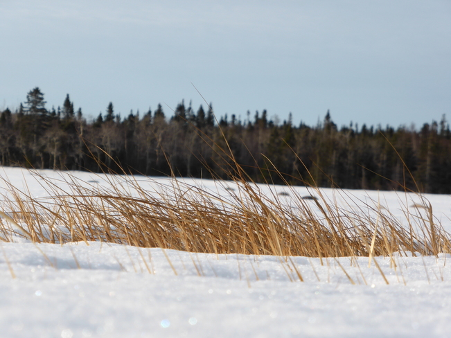 Sign Of Spring Birchy Bay, Newfoundland and Labrador Canada