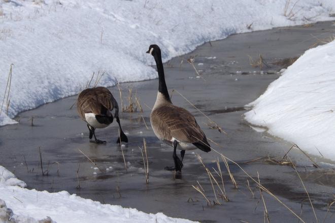 WALKING DOWN THE AVE Thunder Bay, Ontario Canada