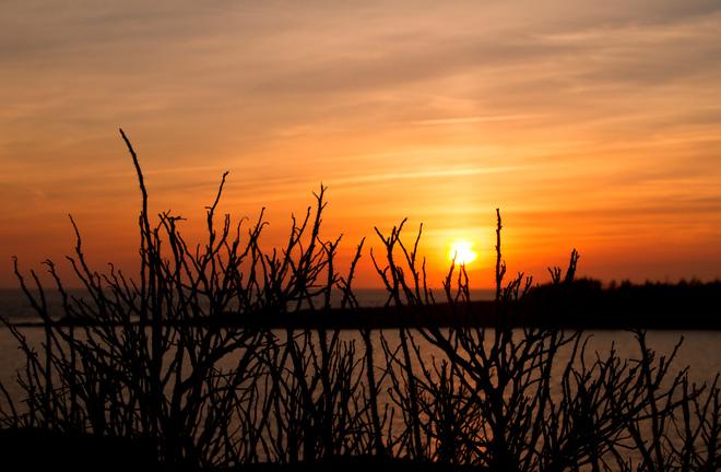 sunset and thorns Yarmouth, Nova Scotia Canada