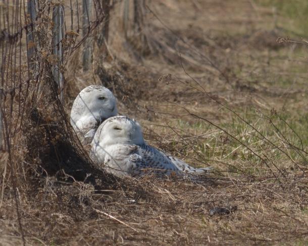 Snug as Two Bugs in a Rug Ottawa, Ontario Canada