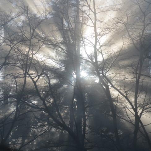 foggy sun streaks Heriot Bay, British Columbia Canada