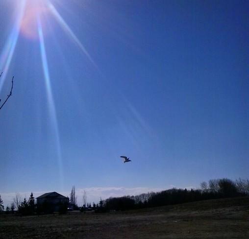 Spring Afternoon Wetaskiwin, Alberta Canada