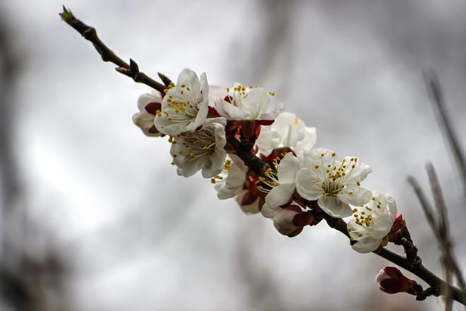 spring blooms Fort Erie, Ontario Canada