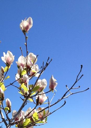 """A Branch of May"" Trepanier, British Columbia Canada"