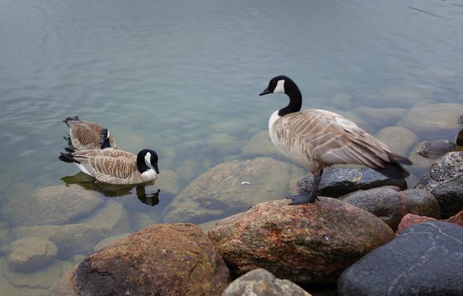 Rain Birds Lethbridge, Alberta Canada
