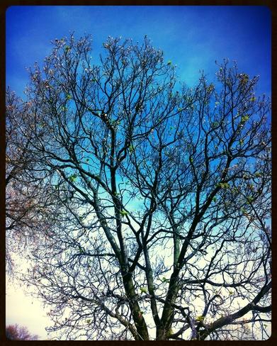 Blooming Tree Windsor, Ontario Canada