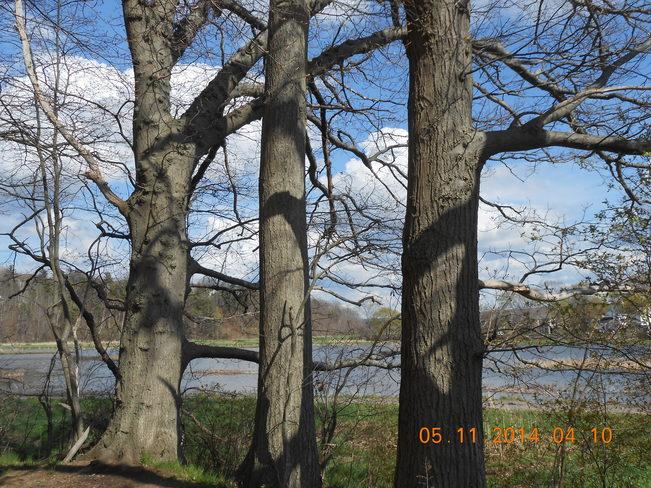 Behind The Trees Kentville, Nova Scotia Canada
