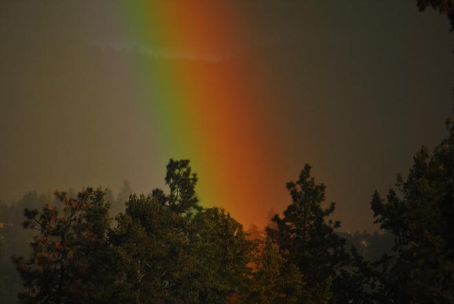 Rainbow through pine South Kelowna, British Columbia Canada