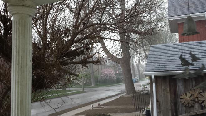 Raining hard St. Thomas, Ontario Canada