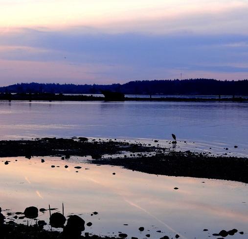 Silhouettes at sunset Royston, British Columbia Canada