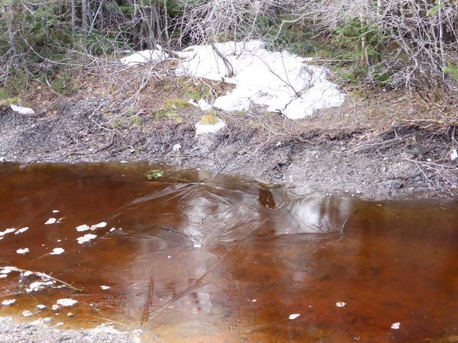 Still Melting Birchy Bay, Newfoundland and Labrador Canada