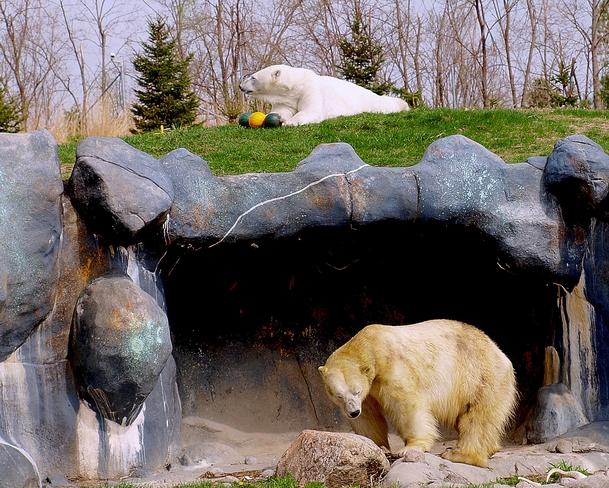 One up,One down (Toronto Zoo) Scarborough, Ontario Canada