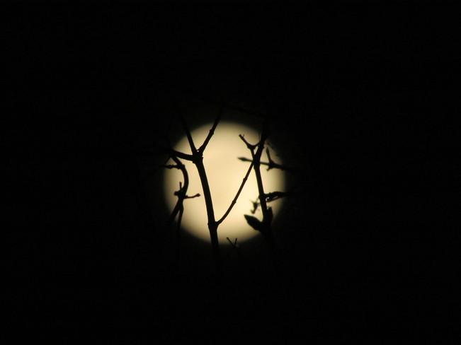Full Moon Winnipeg, Manitoba Canada
