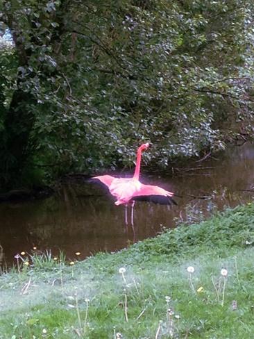 pink flamingo Vancouver, British Columbia Canada