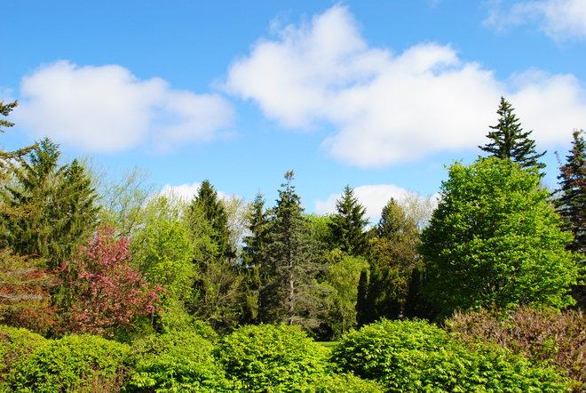 Spring Beauty Kingston, ON
