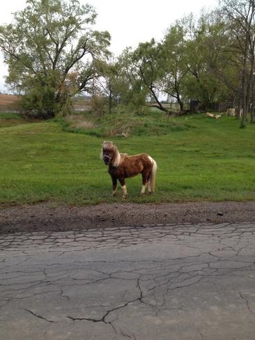 small horse Haldimand, Ontario Canada
