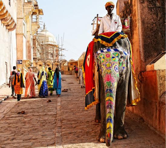 Elephant Ride Jaipur, Rajasthan, India