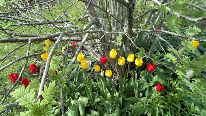 Spring has sprung Carbonear, NL