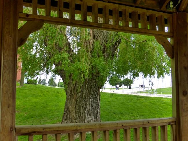 Framed Tree Burlington, ON