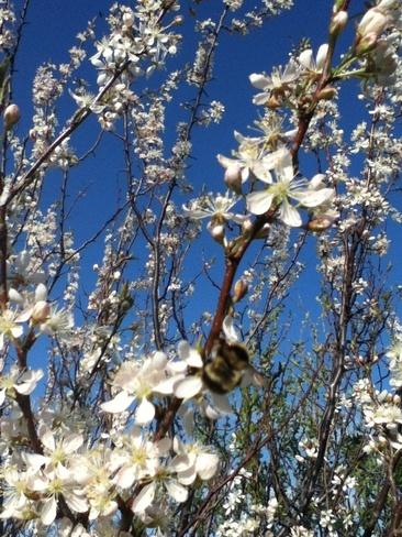 bees are a buzzin Sandridge, Manitoba Canada