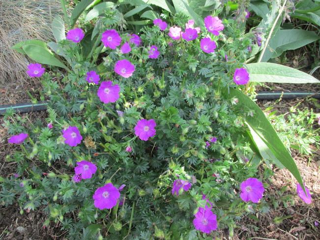 various flowers Surrey, BC