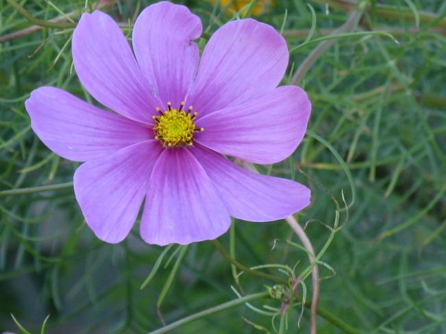 Flower Port Rowan, ON