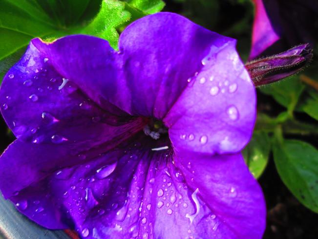 I Love Flowers!! Stoney Creek, Hamilton, ON
