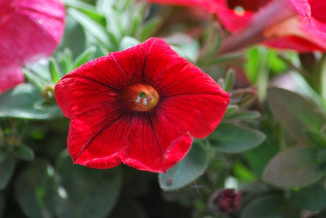Red Velvet Oshawa, ON