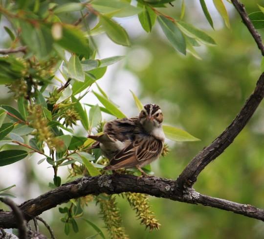In the park.Birds with a song. calgary alberta