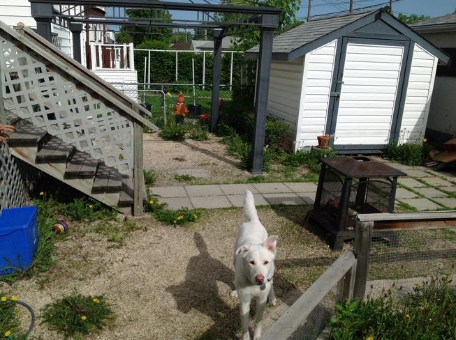 Beautiful pup.And Rex. Winnipeg, MB
