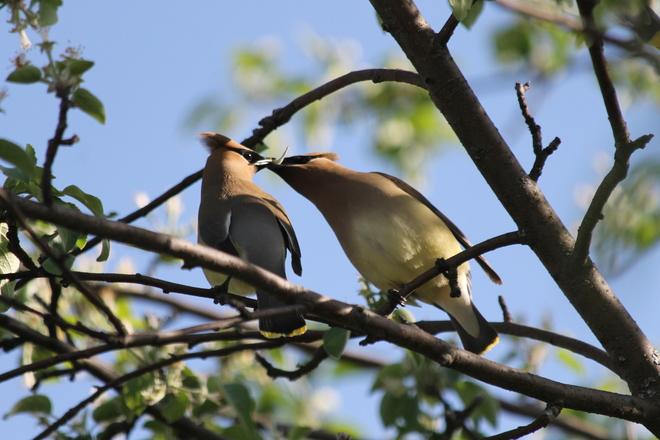 Beautiful creatures in my backyard. Garson, Greater Sudbury, ON