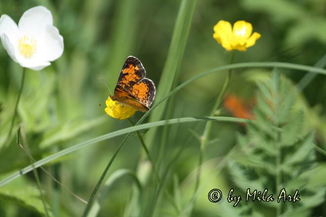 Flowers and Butterflies Kirkfield, ON