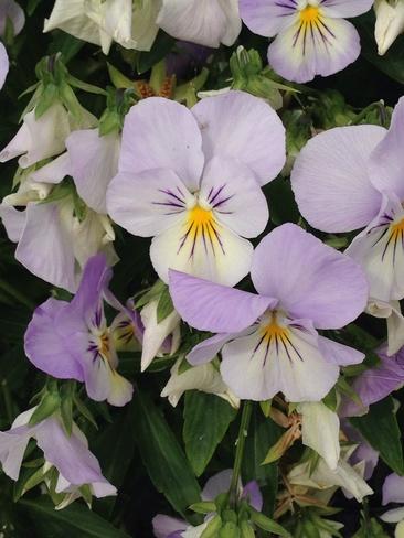 Beautiful Flower Mitchell's Bay, Ontario Canada