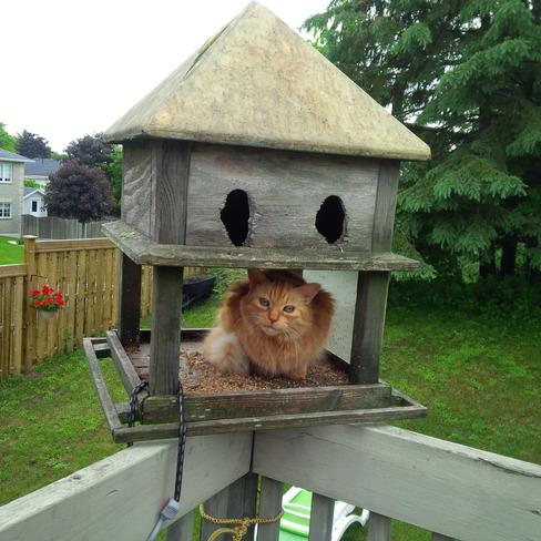 Early Bird Gets The Worm! Penetanguishene, Ontario Canada