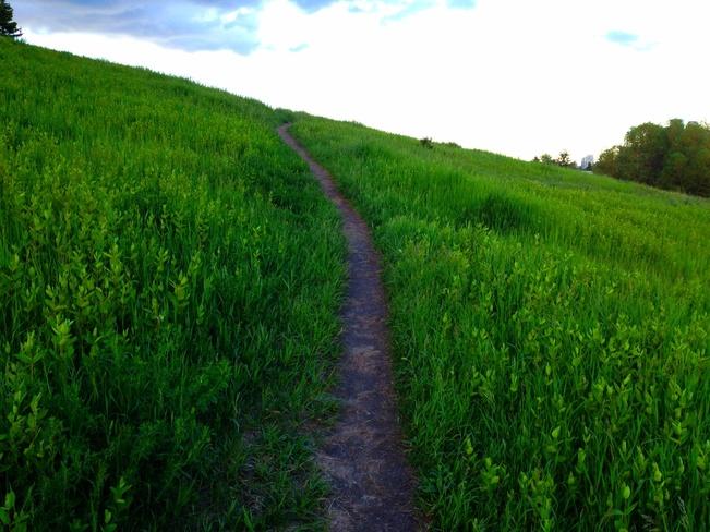 the path of Peace Calgary, Alberta Canada