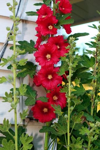 flowers Surrey, BC