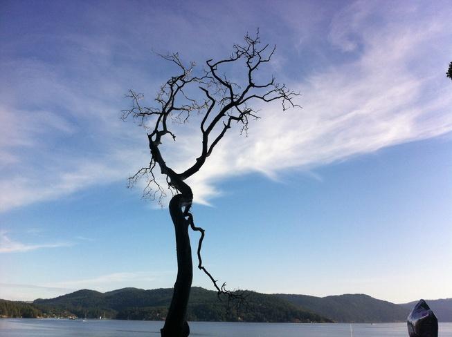 lone tree Brentwood Bay, British Columbia Canada