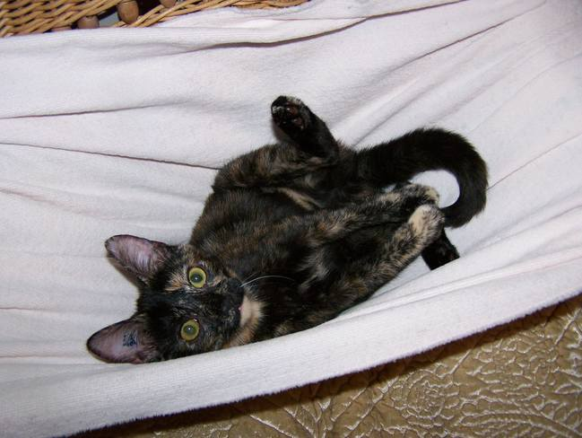 Our new Kitty Haggis-Jill Lake Cowichan, BC