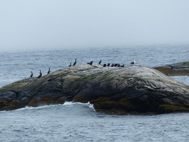 Seagulls and cormorants Saint Catherines River Road, Port Joli, NS B0T 1S0, Canada