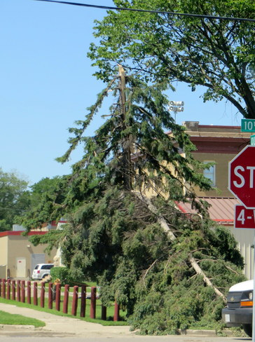 Downed Trees around Brandon Brandon, MB