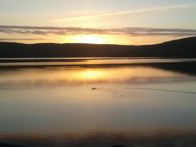 Ducks enjoying the beautiful Bay D'espoir weather Bay D'Espoir NL