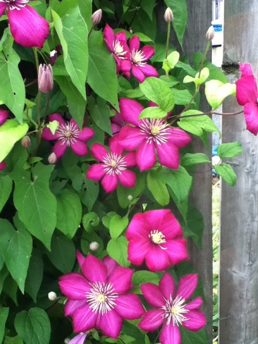 Tecumseh Blooms! Tecumseh, ON, Canada