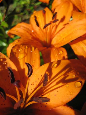Orange Essence Surrey, BC
