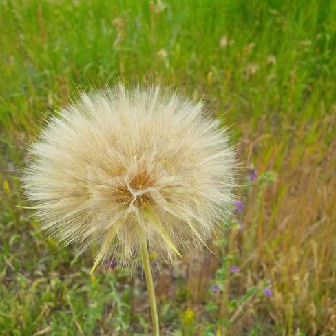 Make a wish. Cochrane, AB