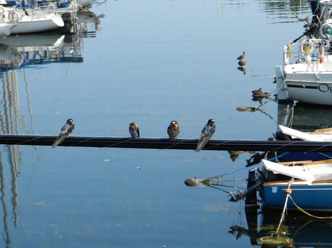 Birds on a Wire Toronto, ON